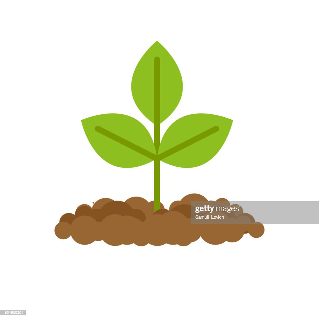 Sprout grows from ground. Plants in soil