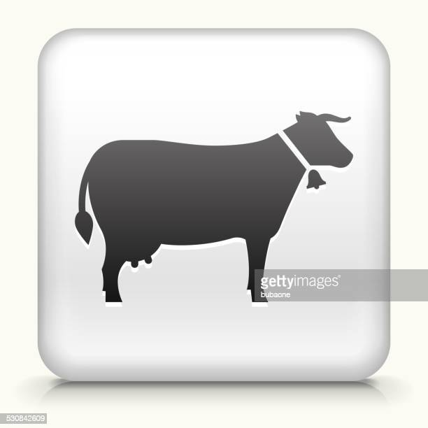square button with cow royalty free vector art - t bone steak stock illustrations, clip art, cartoons, & icons