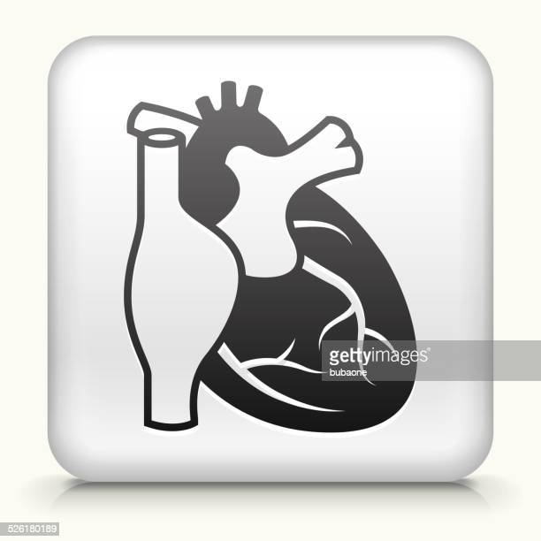 square button with heart royalty free vector art - animal body stock illustrations, clip art, cartoons, & icons