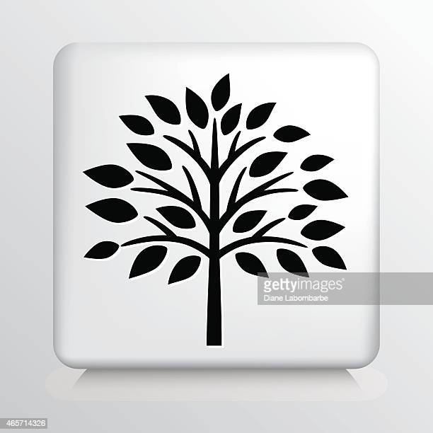 square icon with black fall tree and leaves silhouette - deciduous tree stock illustrations, clip art, cartoons, & icons