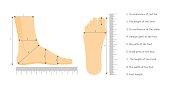 Square Measure Human Feet Shoe Size. Vector