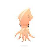 Squid vector isolated illustration