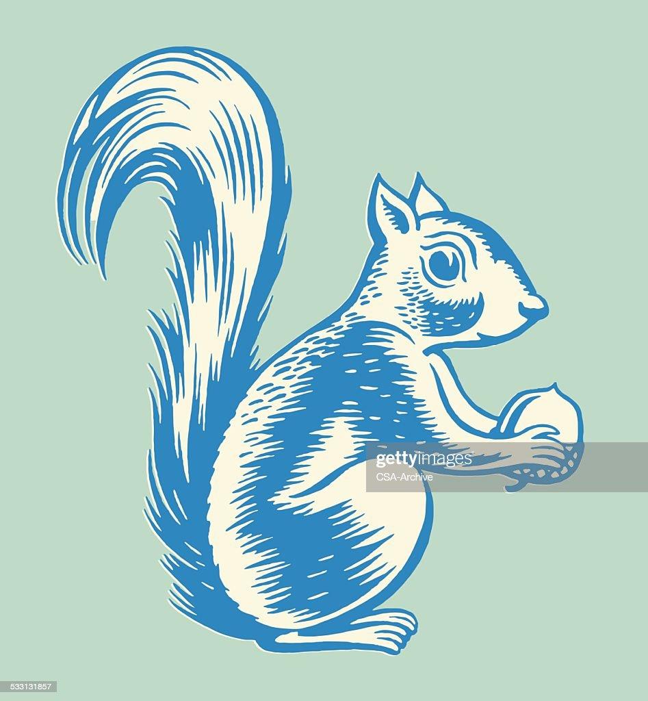 Squirrel Holding Nut