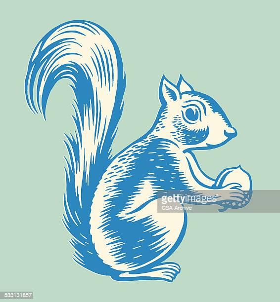 squirrel holding nut - squirrel stock illustrations