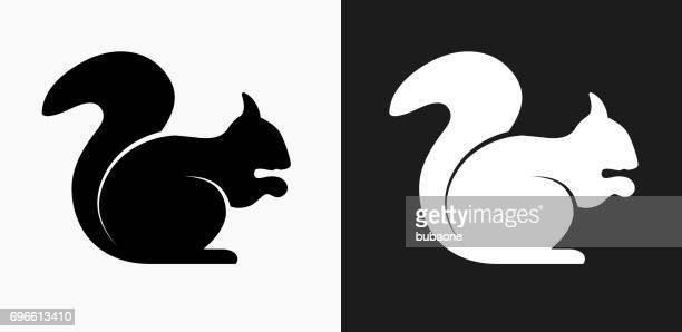 squirrel icon on black and white vector backgrounds - squirrel stock illustrations