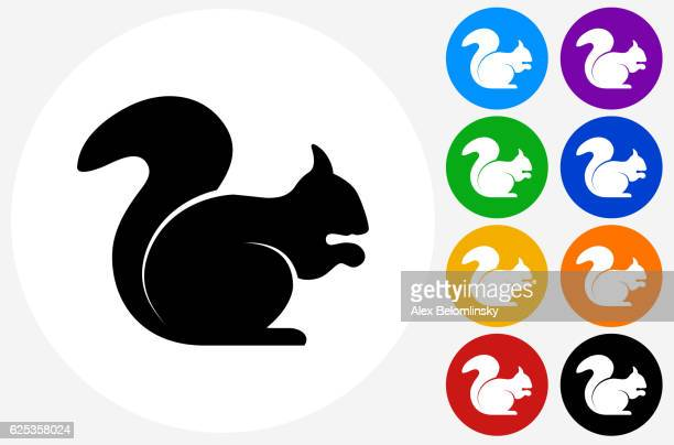 squirrel icon on flat color circle buttons - squirrel stock illustrations