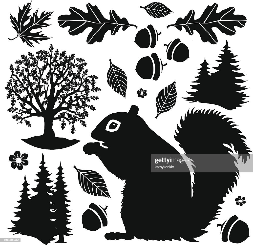 squirrel in the woods