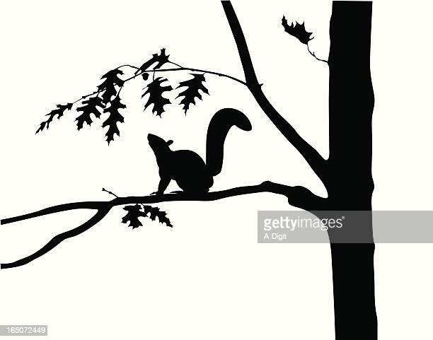 squirrel oak tree vector silhouette - squirrel stock illustrations