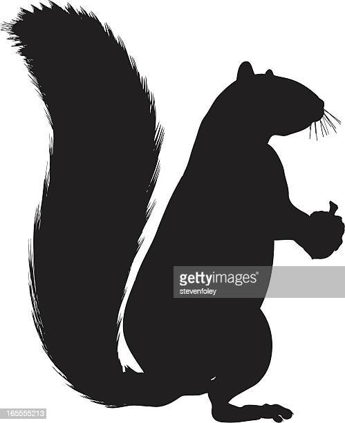squirrel silhouette on white background - squirrel stock illustrations