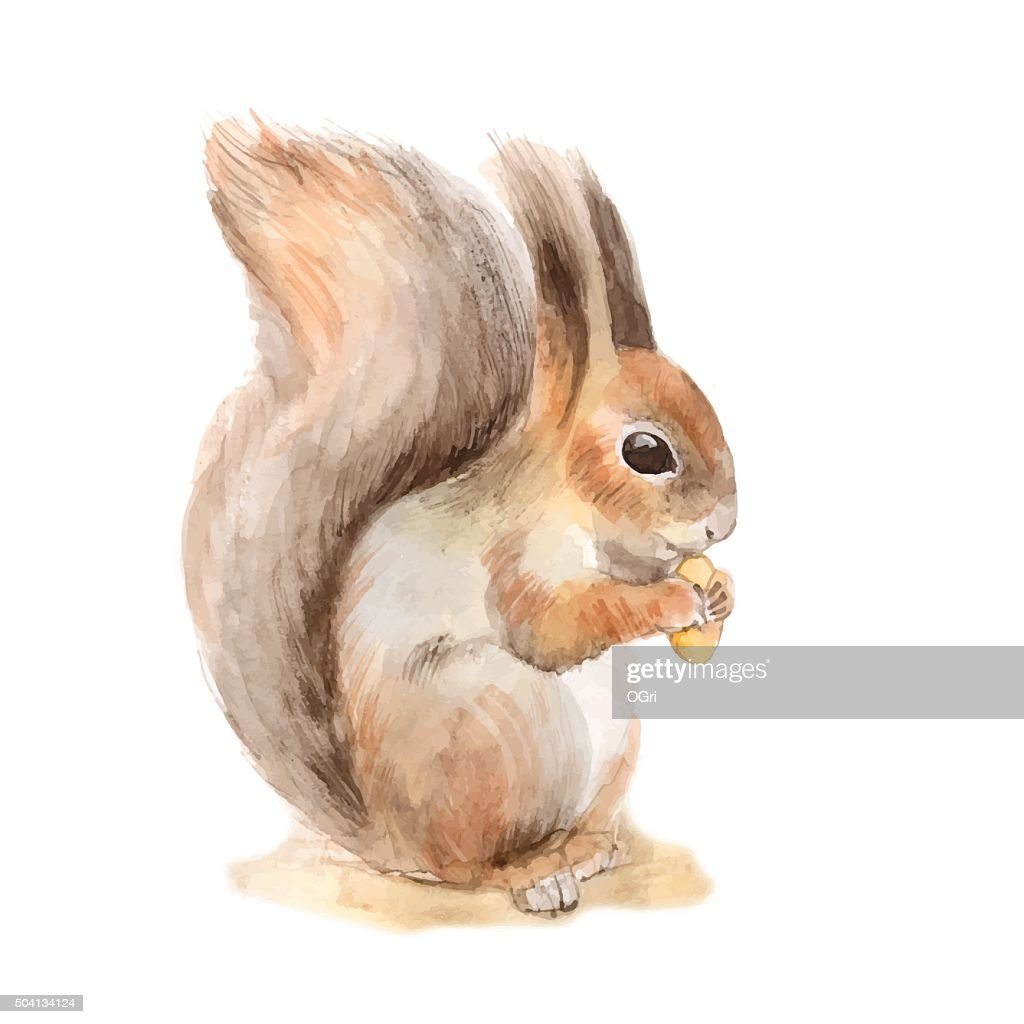 Squirrel with a nut. Vector