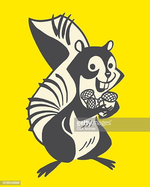 squirrel with nuts - squirrel stock illustrations