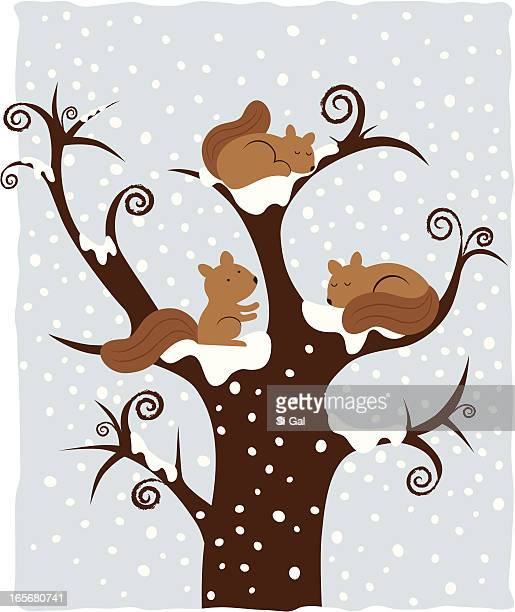 squirrels 4 seasons series - squirrel stock illustrations