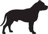 Staffordshire Bull Terrier Dog Vector Silhouette