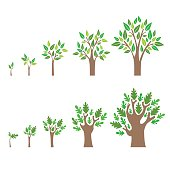 Stage Growth of a Tree Set. Vector
