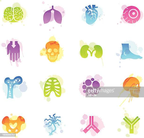 stains icons - anatomy - tissue anatomy stock illustrations, clip art, cartoons, & icons