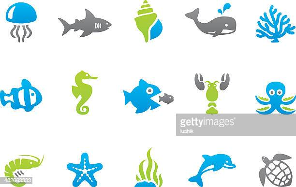 World's Best Starfish Stock Vector Art and Graphics ...