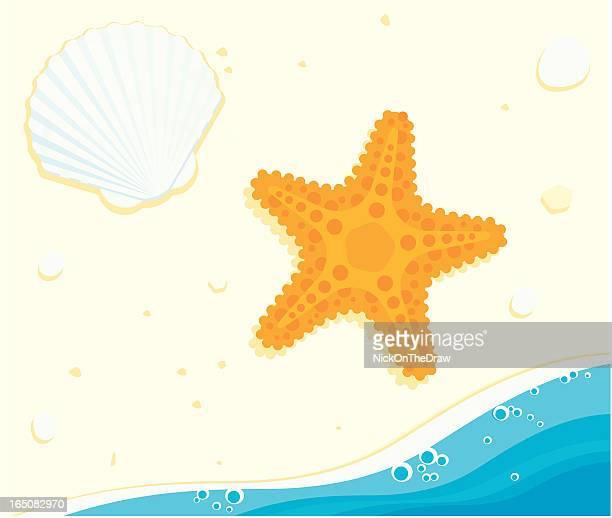 ilustraciones, imágenes clip art, dibujos animados e iconos de stock de estrella de mar y de la - estrella de mar