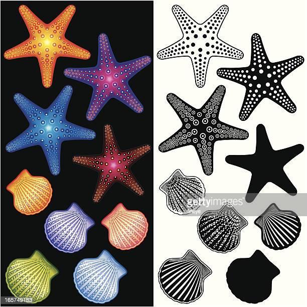 ilustraciones, imágenes clip art, dibujos animados e iconos de stock de starfishes conjunto de iconos y carcasas - estrella de mar