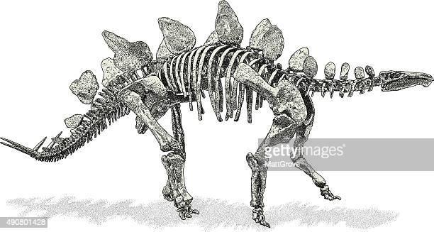stegosaurus - thyreophora stock illustrations, clip art, cartoons, & icons
