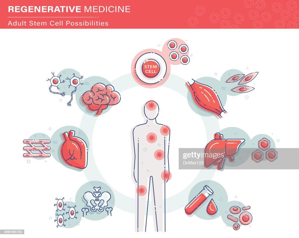 Stem Cell Infographics : stock illustration