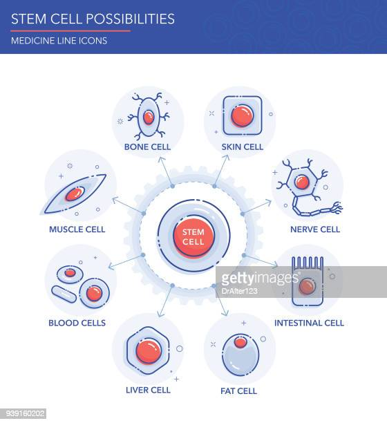 Stem Cell Possibilities