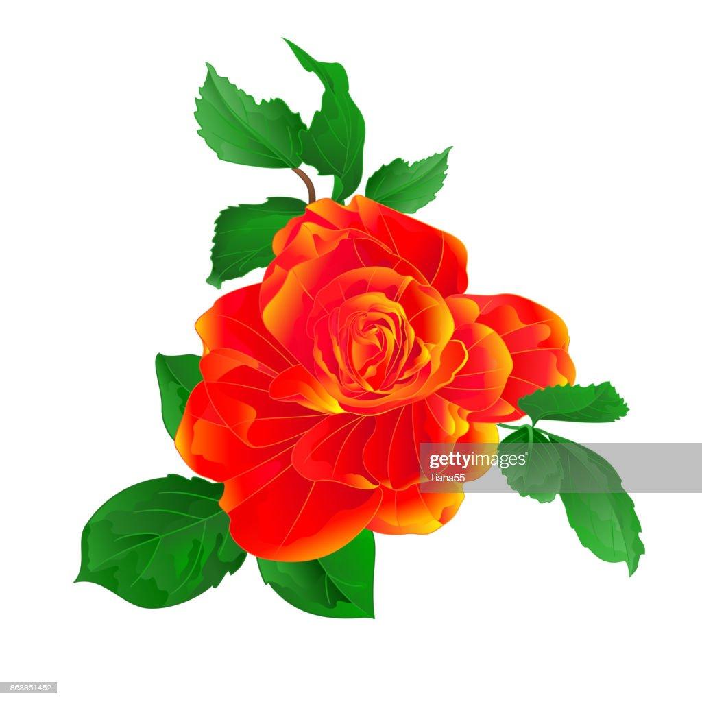 Stem flower orange rose and leaves vintage on a white background  vector illustration editable