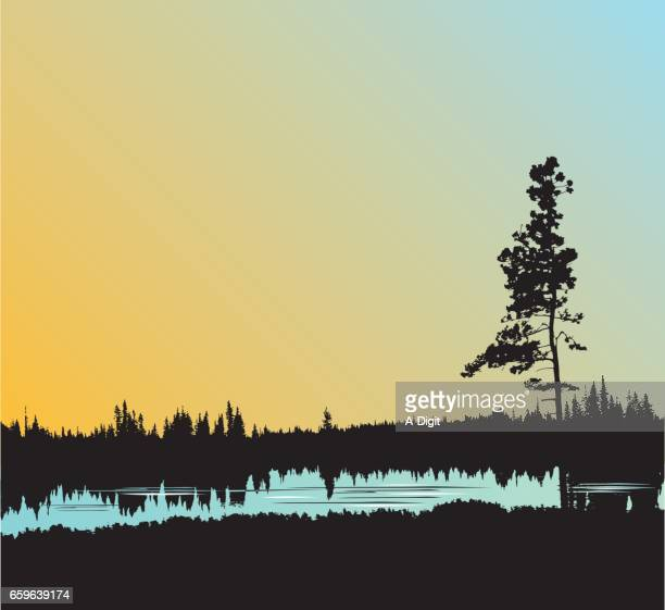 still water forest - ponderosa pine tree stock illustrations, clip art, cartoons, & icons