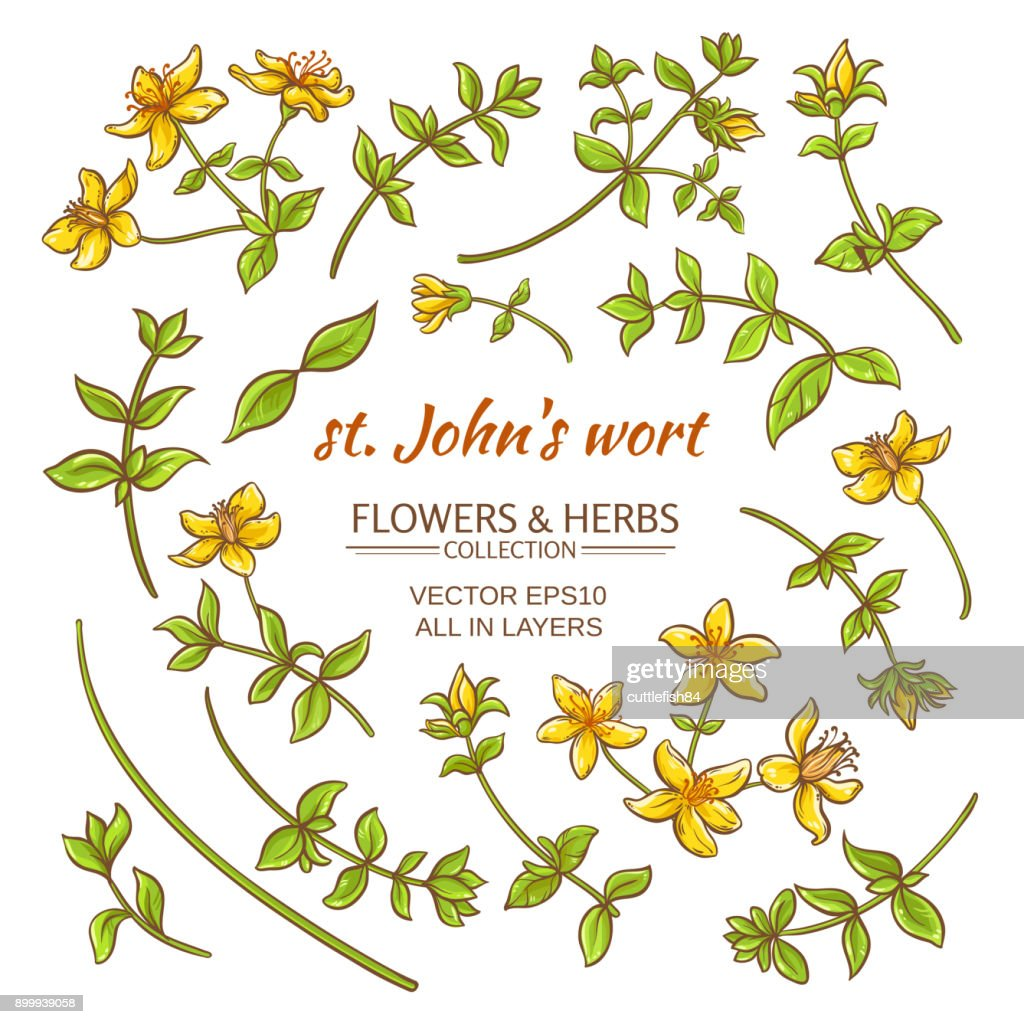 St.John's wort elements vector set