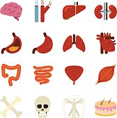 Stock Vector Illustration: Human organs