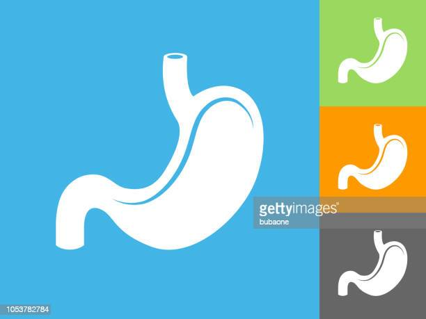 stomach  flat icon on blue background - flat stomach stock illustrations