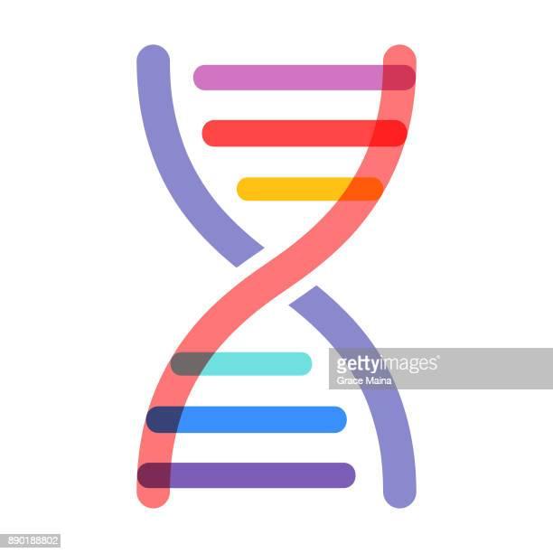 dna strand - vector - chromosome stock illustrations