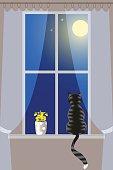 Striped cat on windowsill