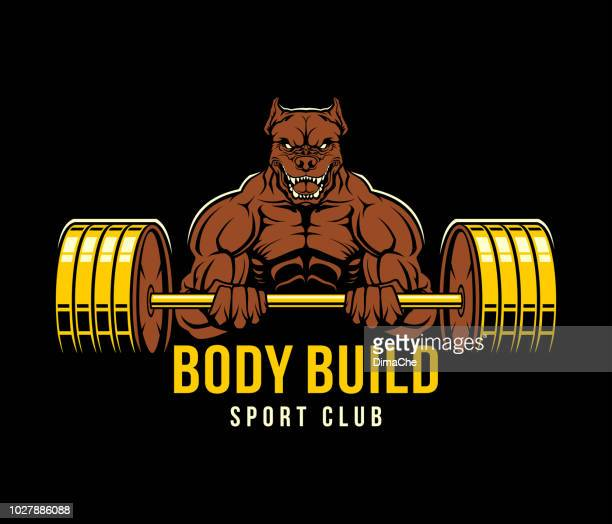 strong power-lifting pit bull dog with barbell. muscular dog mascot - body building stock illustrations