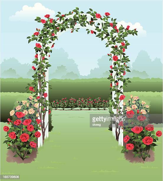 rose garden - hecke stock-grafiken, -clipart, -cartoons und -symbole