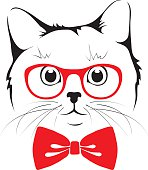 Stylish cat hipster