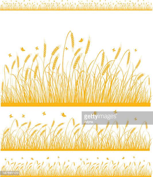 Stylized fields of wheat on white background