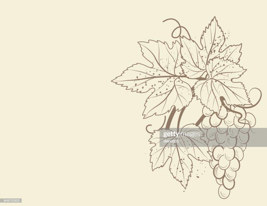Stilisierte Grapevine Rahmen Mit Trauben Blätter Und Reben ...