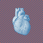 Stylized human heart illustration on stripe BG