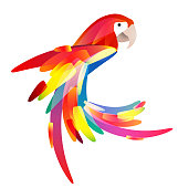 Stylized illustration of a parrot with a multicolored tail.
