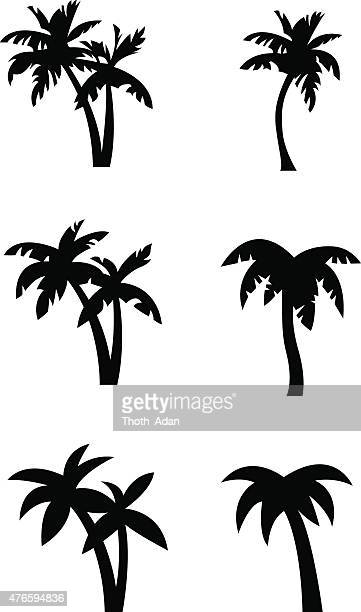 stylized palm tree silhouettes - coconut leaf stock illustrations, clip art, cartoons, & icons