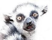Stylized portrait of lemur monkey in halftone vector