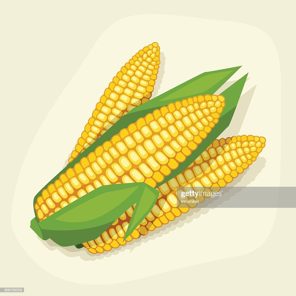 Stylized vector illustration of fresh ripe corn cobs.
