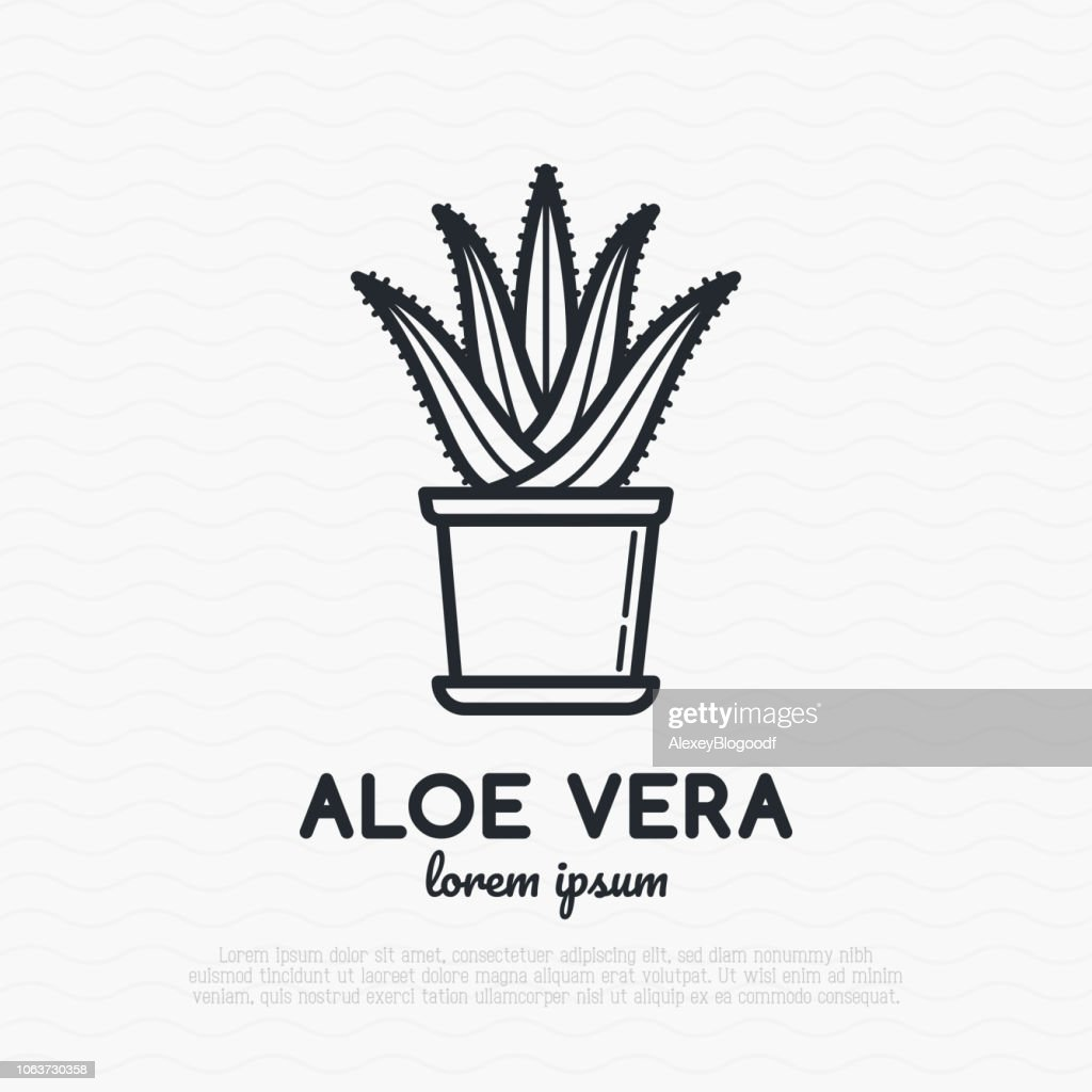 Succulent Aloe vera in pot. Thin line icon. Modern vector illustration of houseplant.