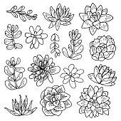 Succulent flowers line art drawing set.