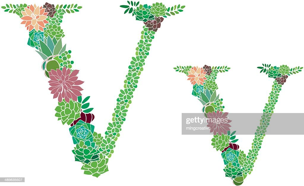 Succulent letter v and v vector art getty images succulent letter v and v vector art altavistaventures Choice Image