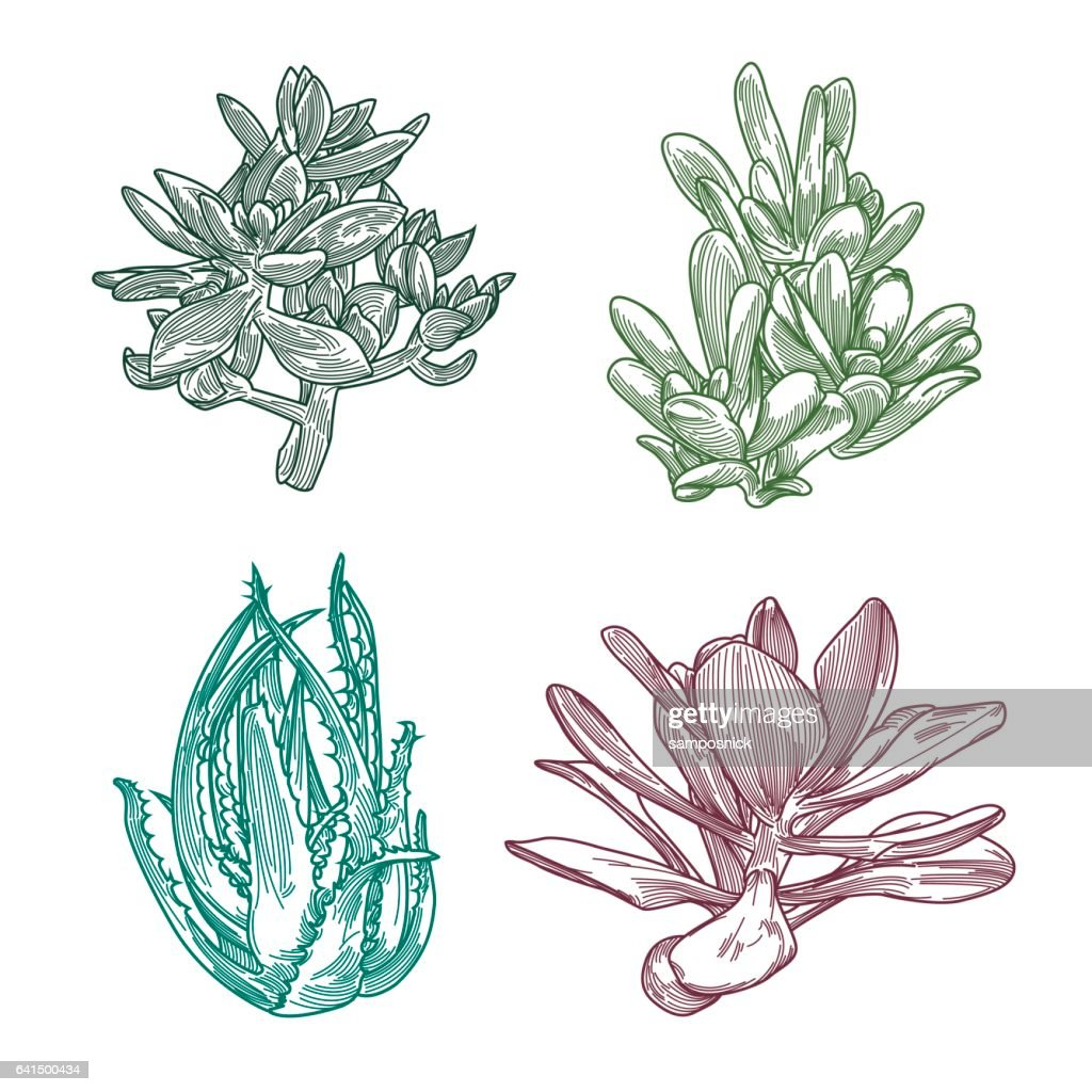 Succulent Line Art Set