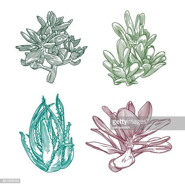 Succulent Line Art Set