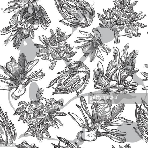 Motif de succulents