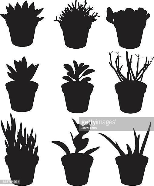 illustrations, cliparts, dessins animés et icônes de succulent plant silhouettes - plante verte
