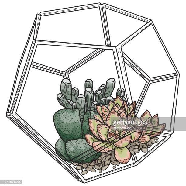 Succulent Plants in Glass Terrarium